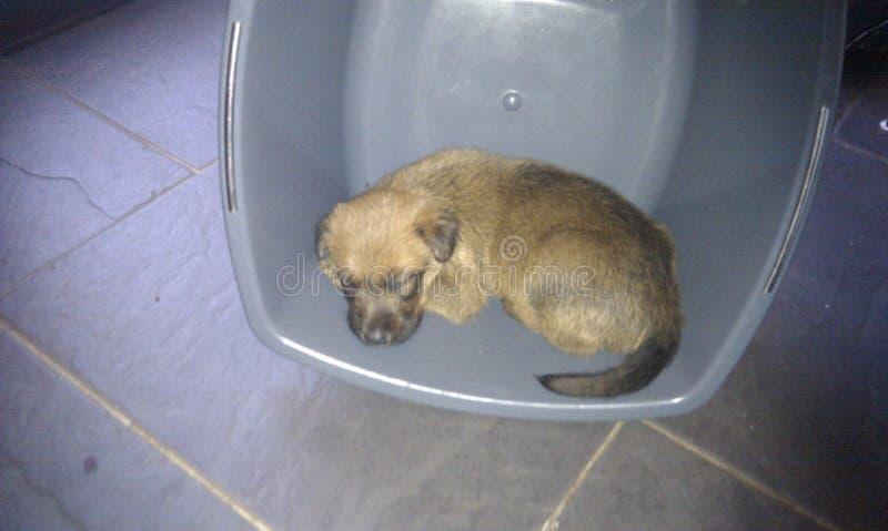 Perrito del terrier irlandés en un lavabo fotos de archivo