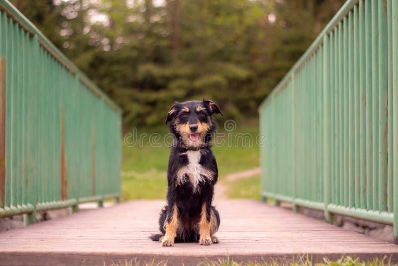 Perrito en el medio de un puente fotografía de archivo libre de regalías