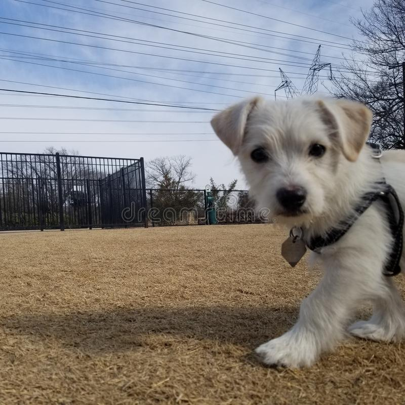 Perrito en el parque fotos de archivo libres de regalías