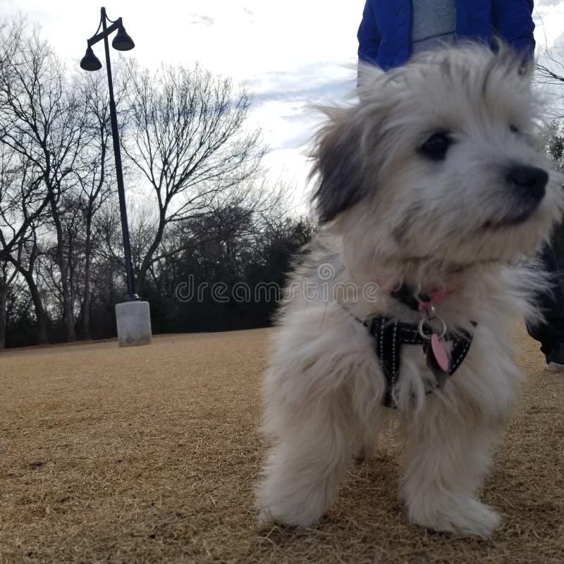 Perrito en el parque imagenes de archivo