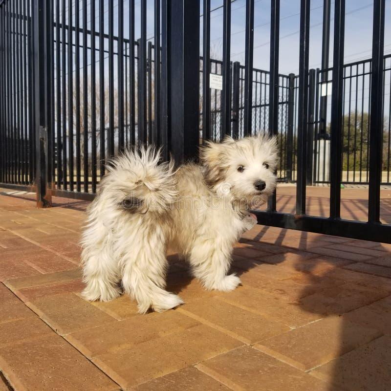 Perrito en el parque fotografía de archivo libre de regalías