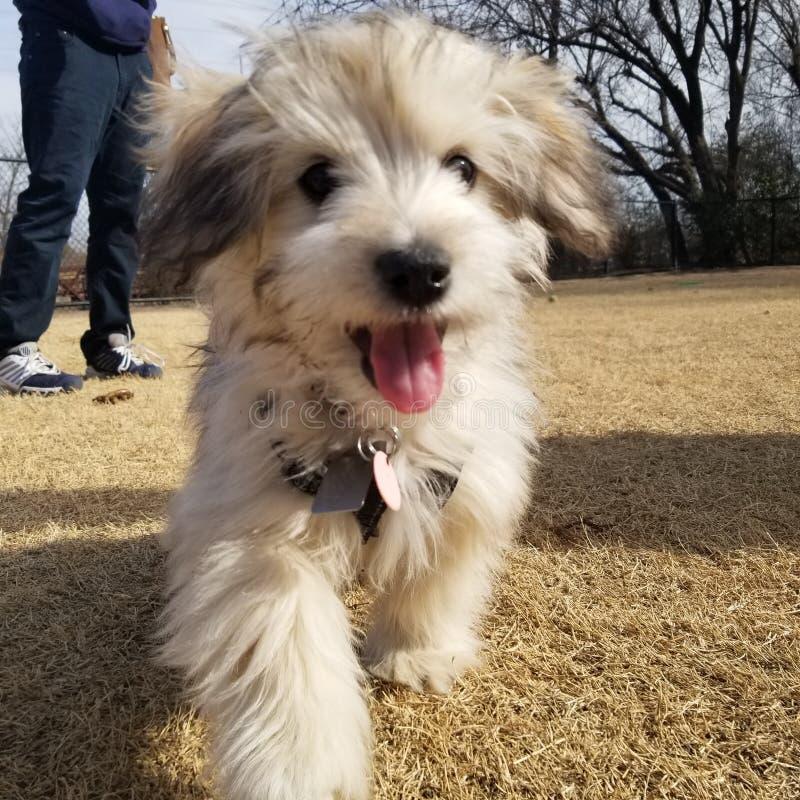 Perrito en el parque foto de archivo