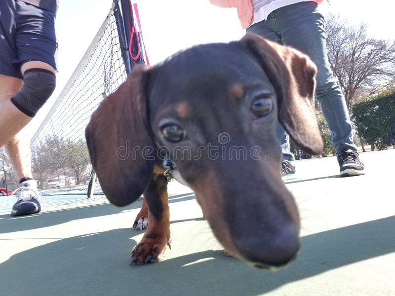 Perrito en el parque fotografía de archivo