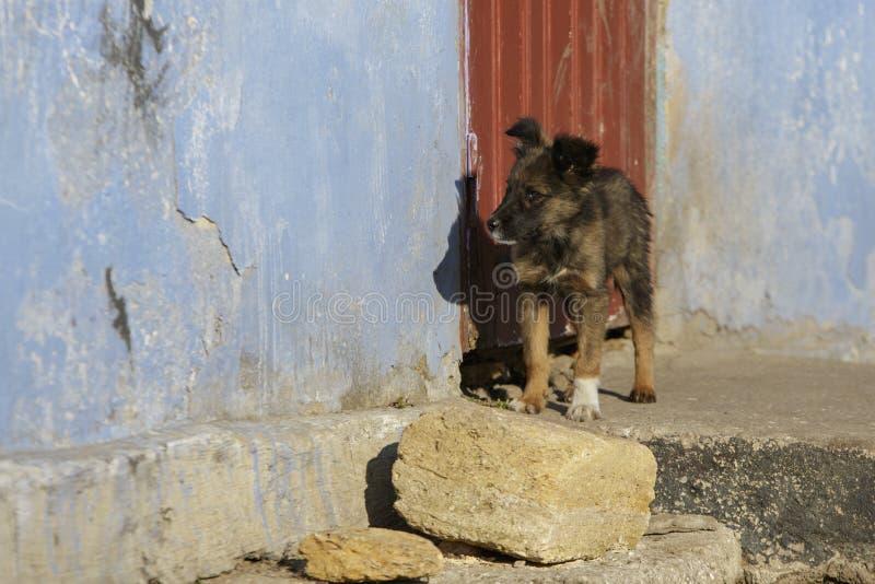 Perrito en el umbral fotografía de archivo libre de regalías