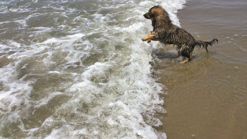 Perrito en la playa fotografía de archivo libre de regalías
