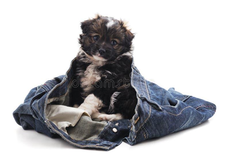 Perrito en pantalones imágenes de archivo libres de regalías