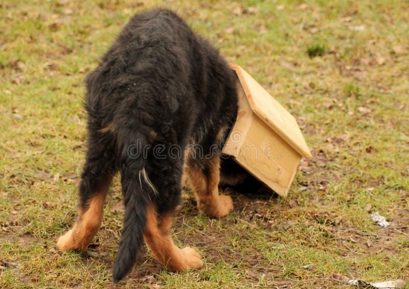 Perrito en su doghous imagen de archivo