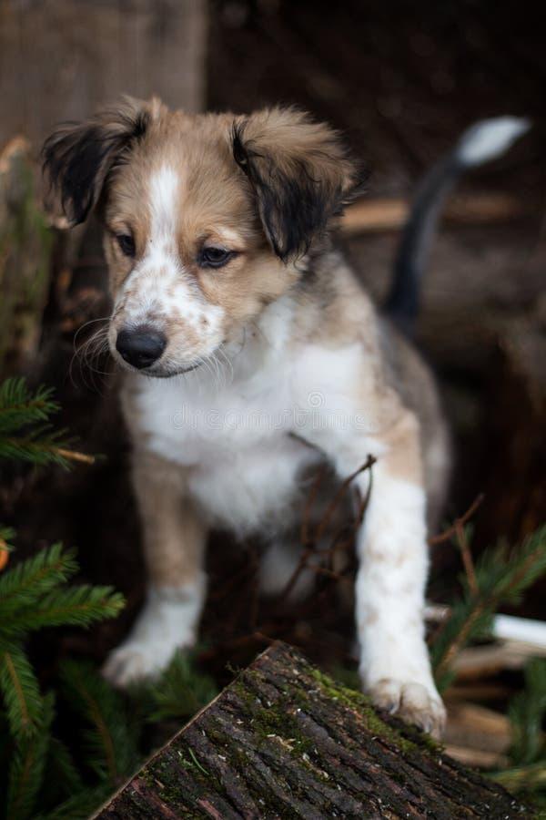 Perrito en un bosque fotos de archivo libres de regalías