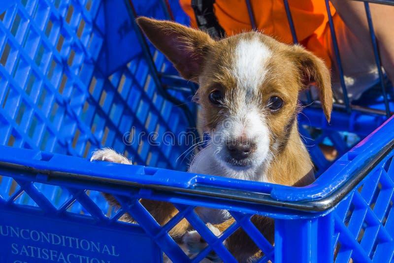 Perrito en un carro de la compra fotografía de archivo libre de regalías