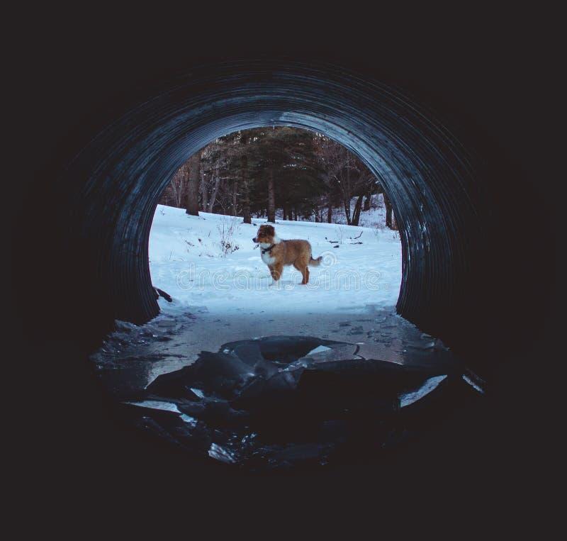 Perrito en un túnel helado imagen de archivo libre de regalías