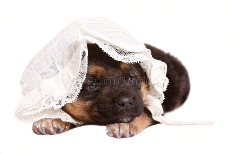 Perrito encantador con el casquillo del bebé fotografía de archivo libre de regalías