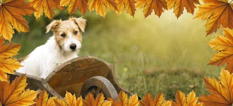 Perrito feliz lindo con la frontera de las hojas de otoño imagen de archivo libre de regalías