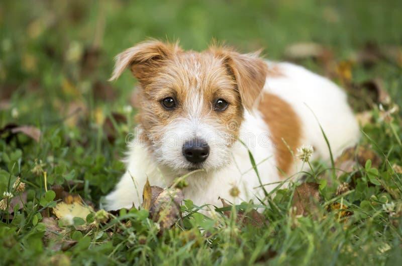 Perrito feliz lindo del perro casero que espera en la hierba imagenes de archivo