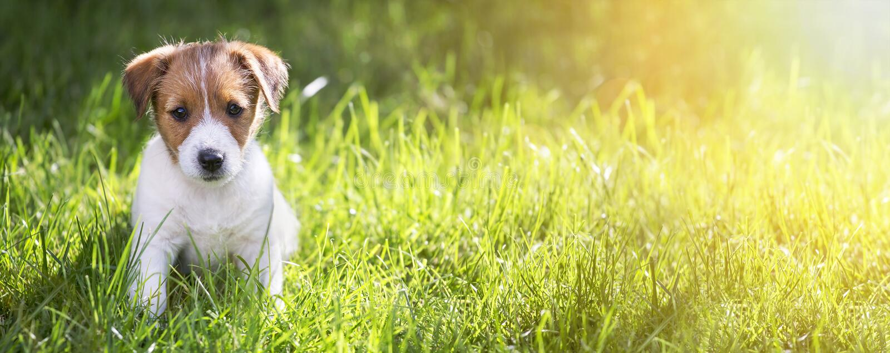 Perrito feliz que se sienta en la hierba fotos de archivo