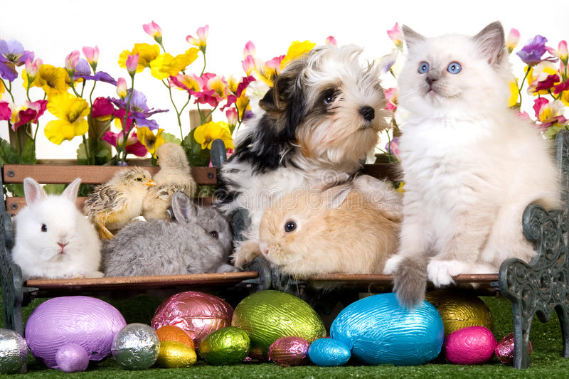 Perrito, gatito, conejitos y polluelos de Pascua fotografía de archivo