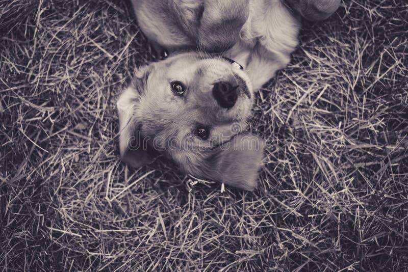 Perrito juguetón imagen de archivo