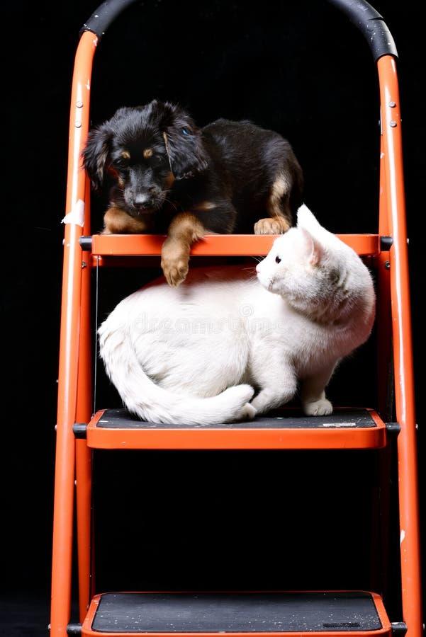 Perrito lindo con el gato blanco en una escalera de plegamiento imagen de archivo