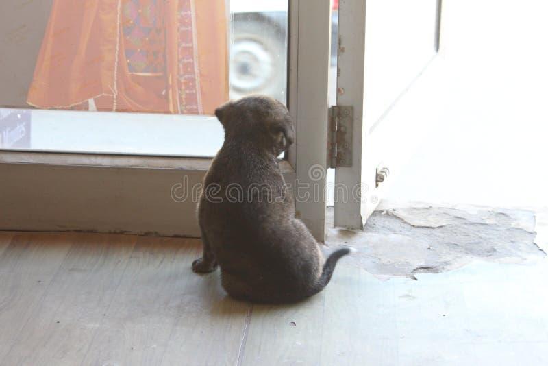 Perrito lindo de la calle que mira afuera fotos de archivo