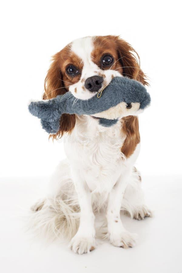 Perrito lindo del perro con el juguete suave imagen de archivo