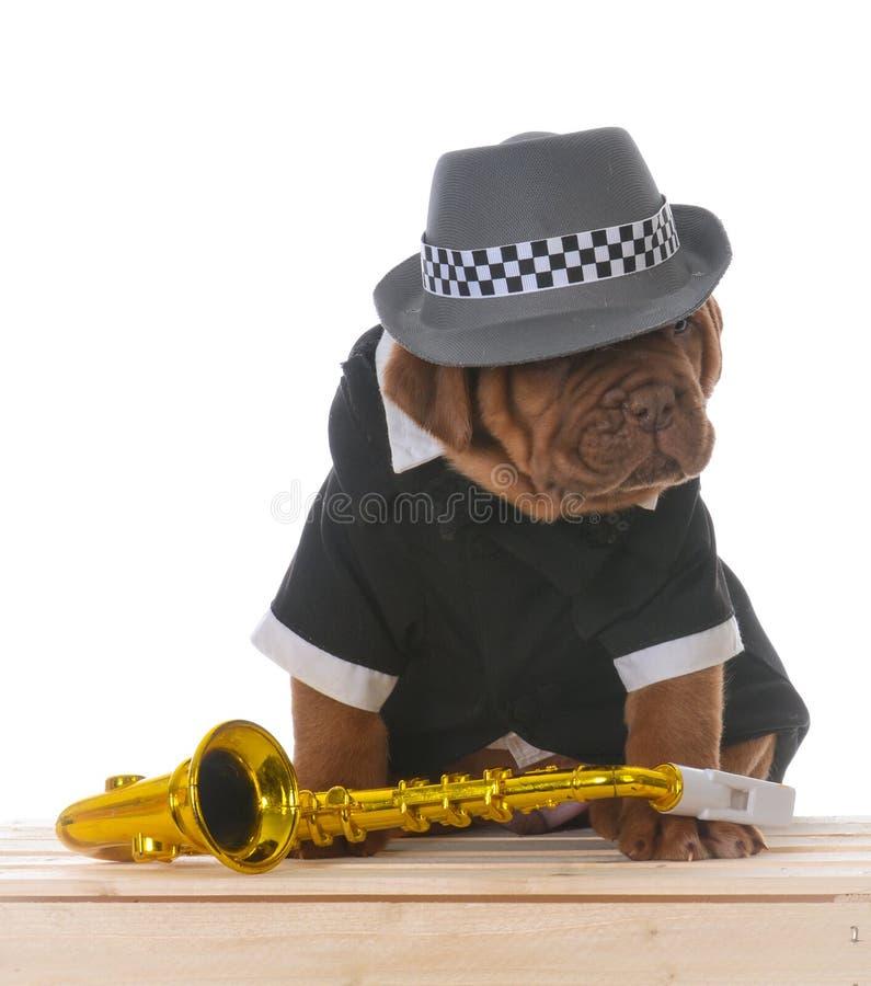 Perrito masculino de dogue de bordeaux imagen de archivo