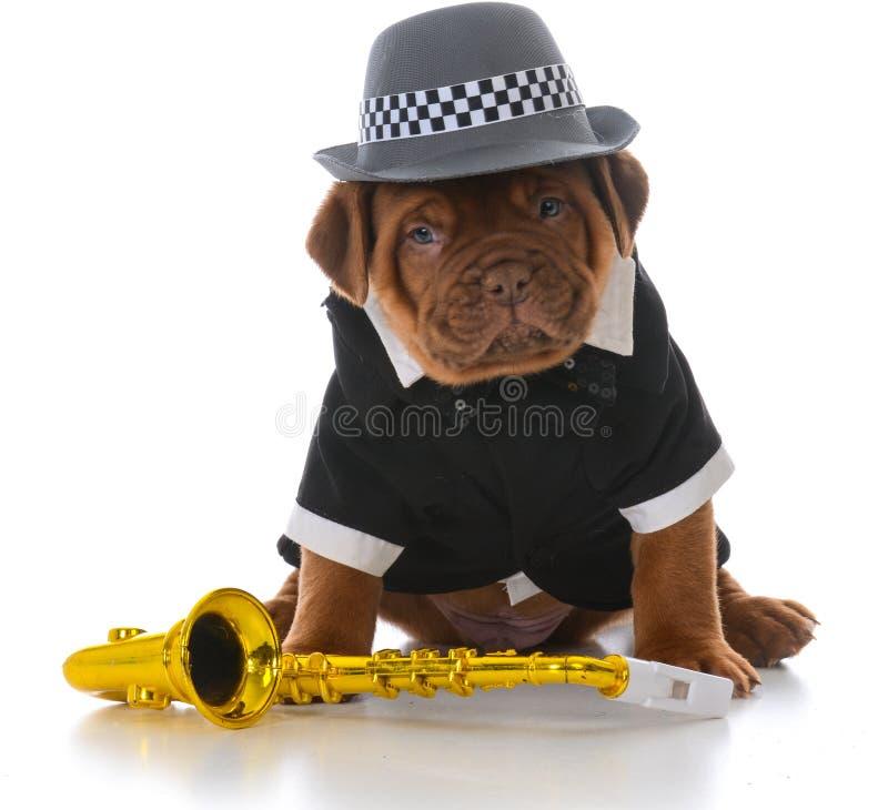 Perrito masculino de dogue de bordeaux foto de archivo libre de regalías