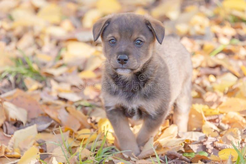 Perrito mestizo en follaje de otoño Animales sin hogar Refugio para animales Juegos del perrito imagen de archivo libre de regalías