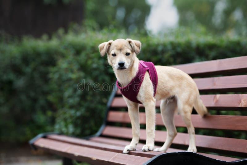 Perrito mezclado adorable de la raza que presenta al aire libre fotos de archivo libres de regalías