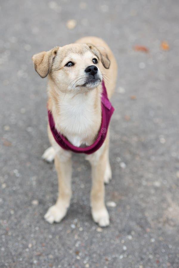 Perrito mezclado adorable de la raza que presenta al aire libre fotos de archivo