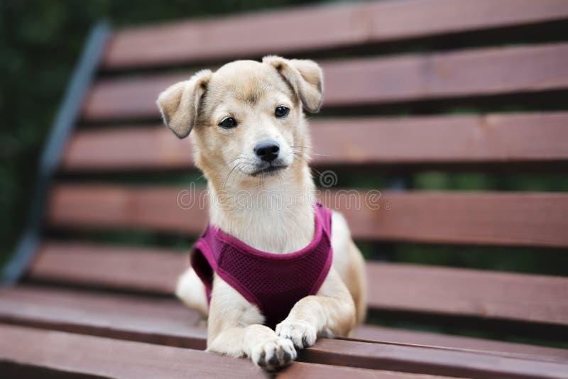 Perrito mezclado adorable de la raza que presenta al aire libre fotografía de archivo
