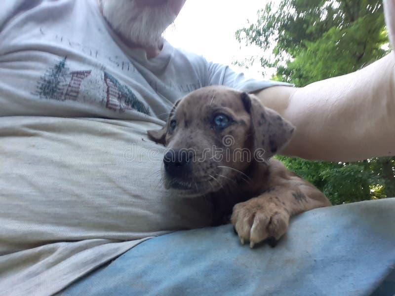 Perrito observado azul lindo con una cruz en su ojo fotos de archivo