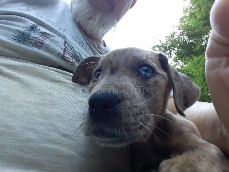 Perrito observado azul lindo con una cruz en su ojo foto de archivo