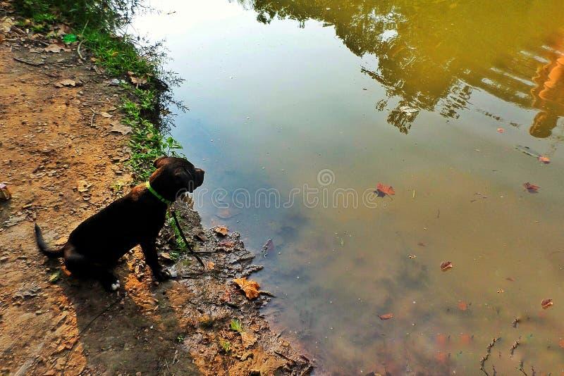 Perrito por el río fotografía de archivo