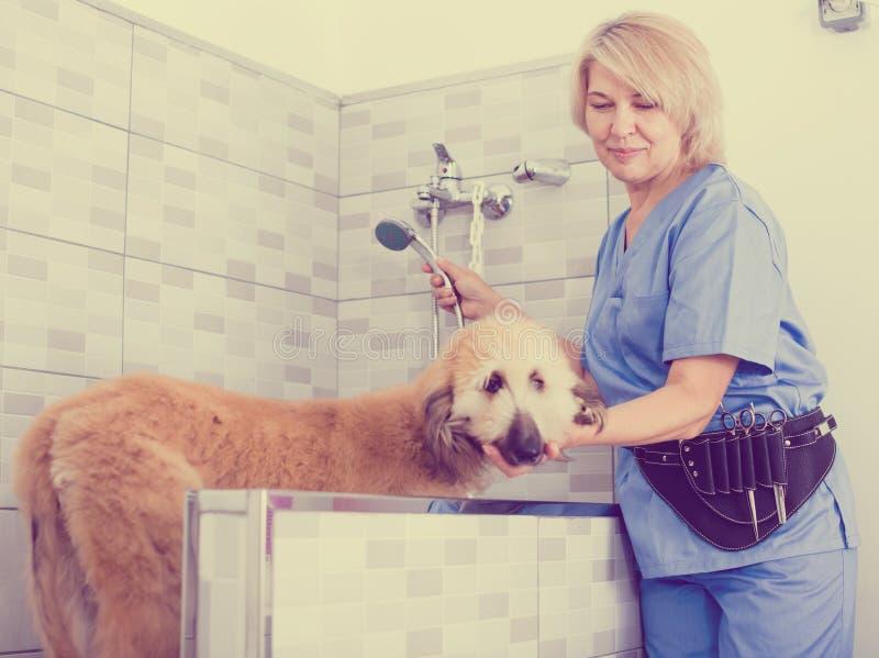 Perrito profesional del lavado en el salón de pelo para los animales fotografía de archivo