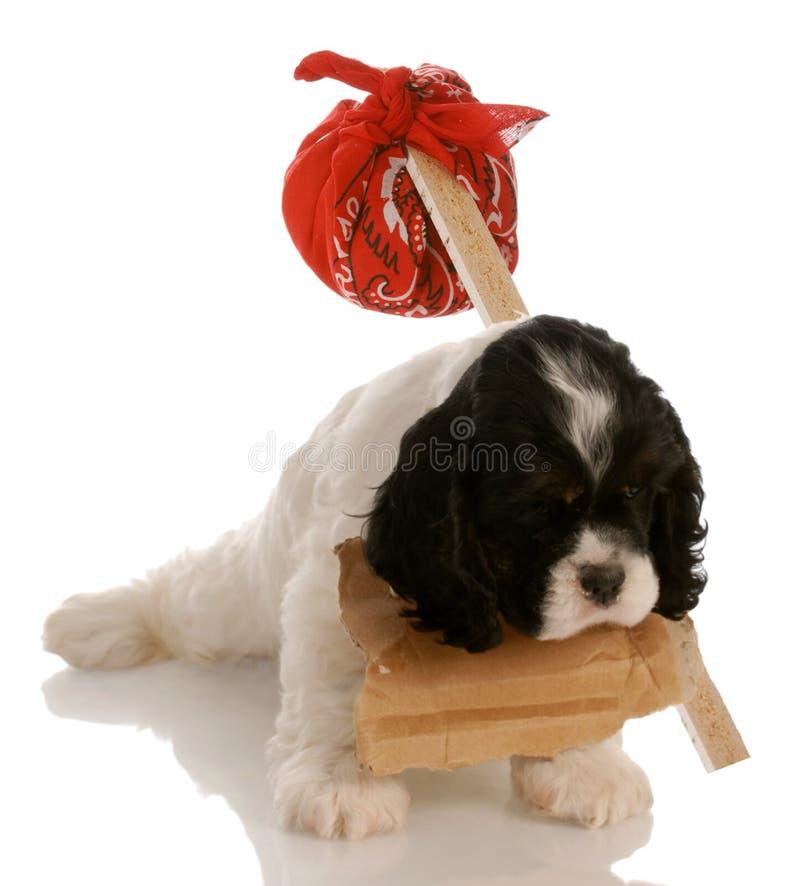 Perrito que busca el nuevo hogar foto de archivo libre de regalías