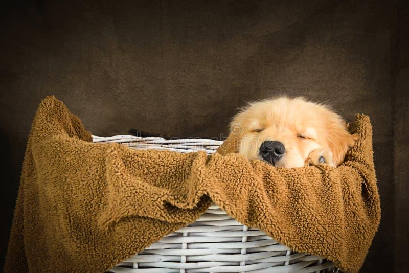 Perrito que duerme en la cesta en fondo marrón fotos de archivo