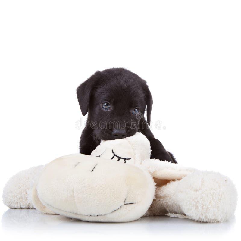 Perrito que mastica en un juguete imagen de archivo
