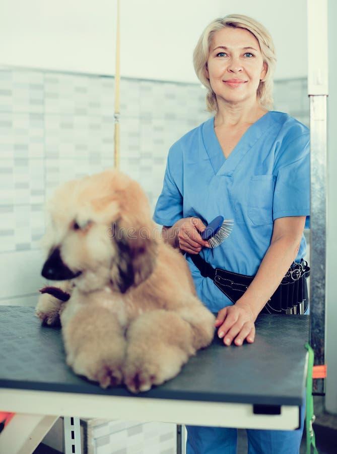 Perrito que se peina profesional en peluquero fotos de archivo