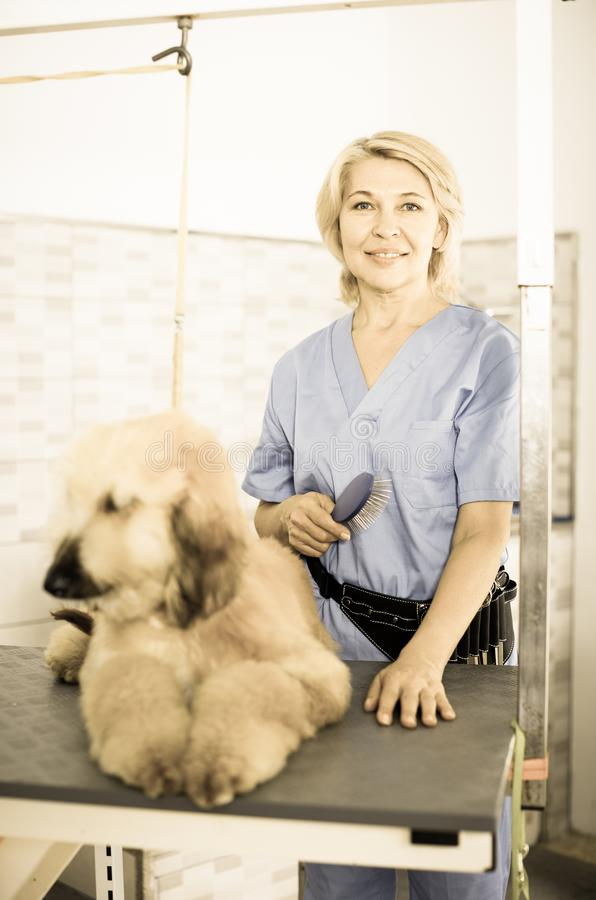 Perrito que se peina profesional en peluquero imagenes de archivo