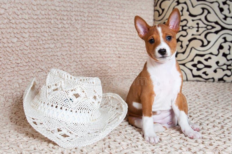 Perrito rojo divertido del perro con el sombrero blanco foto de archivo