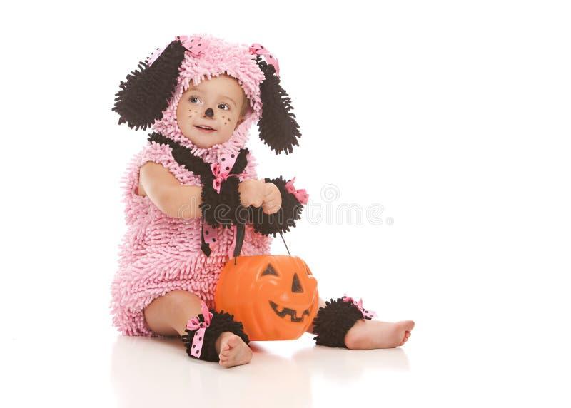 Perrito rosado fotos de archivo libres de regalías