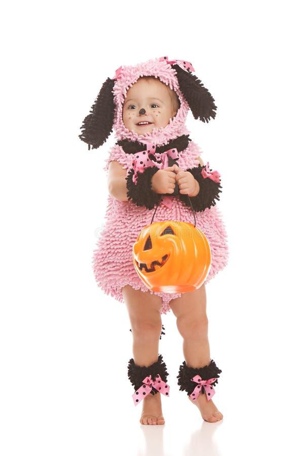 Perrito rosado foto de archivo libre de regalías