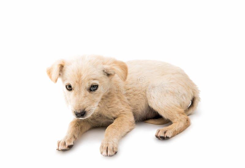 Perrito sin hogar fotos de archivo libres de regalías