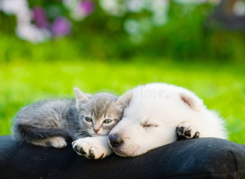 Perrito suizo blanco del ` s del pastor y pequeño gatito que duermen junto fotos de archivo