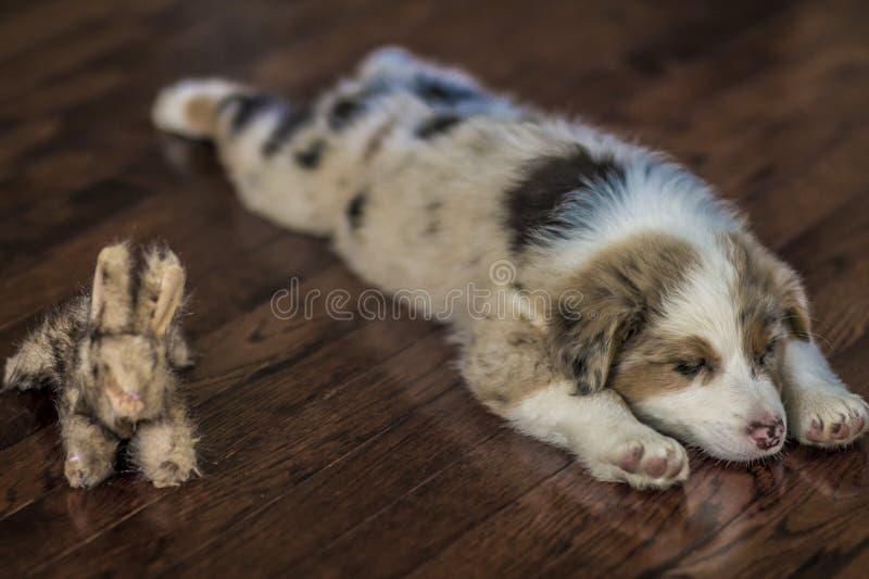 Perrito y amigo imagen de archivo libre de regalías