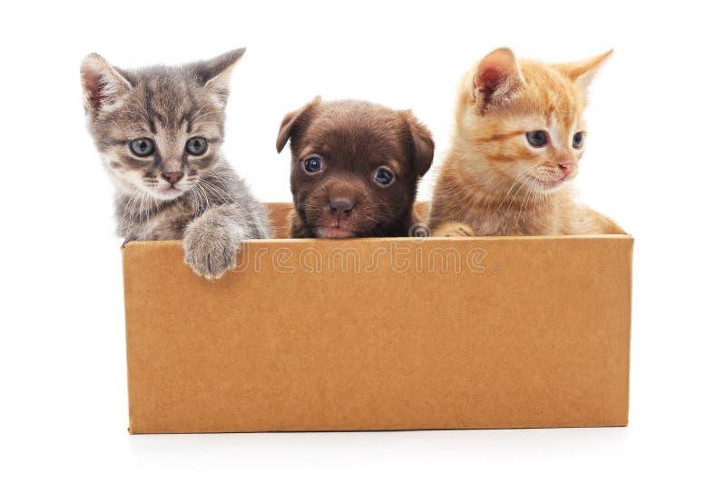 Perrito y dos gatitos en una caja imágenes de archivo libres de regalías