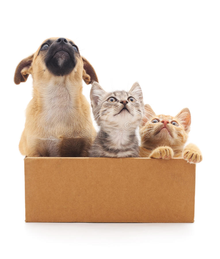 Perrito y dos gatitos en una caja imagen de archivo libre de regalías