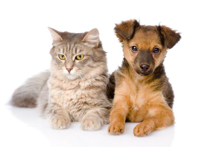 Perrito y gato mezclados de la raza junto Aislado en el fondo blanco imagen de archivo