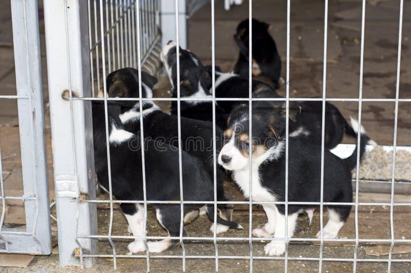 Perritos blancos y negros hermosos en la jaula del refugio foto de archivo libre de regalías