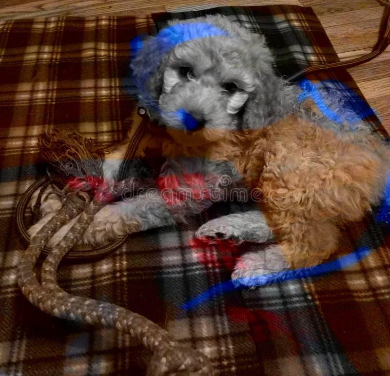Perritos coloridos - diversión de la cámara con los perritos fotos de archivo