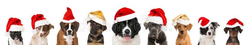 Perritos de la Navidad imagen de archivo